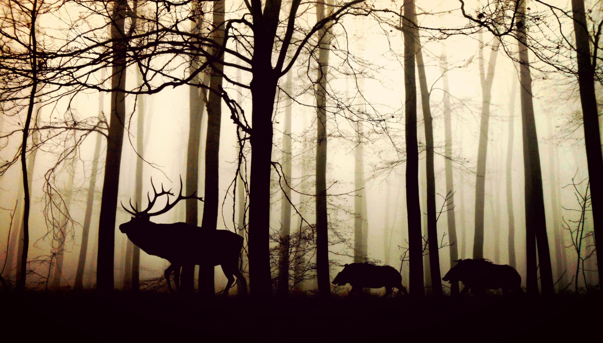 Wildbiologie / Tierkunde